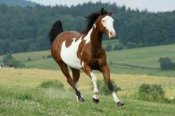 paint-horse-3e2f553e