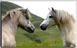 pony-5902bb0d