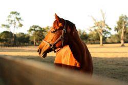 profilo_cavallo-4e63502c