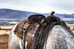 saddle-419745_1280-7acf3cb8