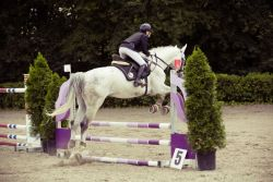 show-jumping-594156_1280-16a3a301