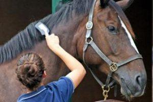 spazzolare-il-cavallo