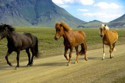 tre_cavallini-0d3eebfa