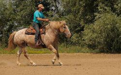 western-riding-587014_640-d246d2f6