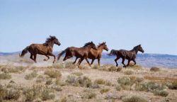 wild-horses-836aacb6