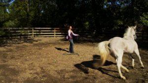 200243463-addestratore-di-cavalli-pascolo-guidare-grigio-cavallo