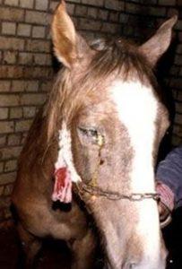 malattie-cavallo_n2